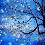 Cartão-Postal com as estrelas