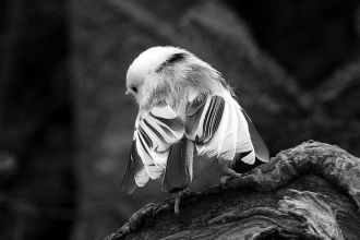 Little-Ballerina.jpg